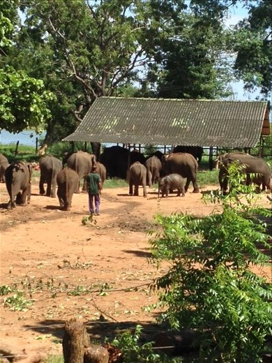 Visit to the Elephant Transit Home in Udawalawe National Park.