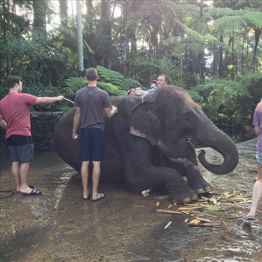 Bath and breakfast with the elephants.