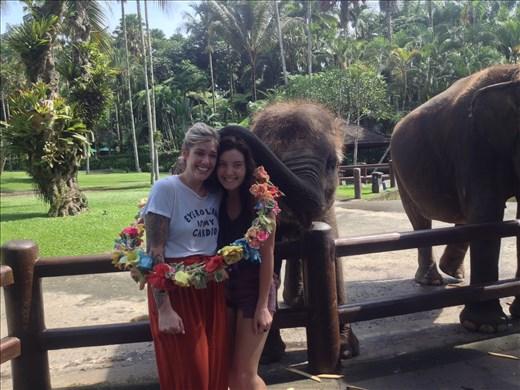 Baby elephant hugs.