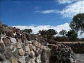 So pretty. Cactus TREES?: by danielapuebla, Views[168]