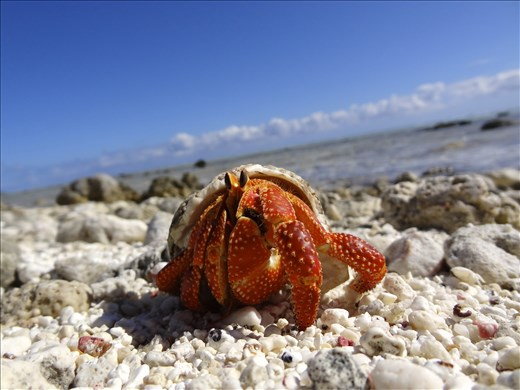 A friendly hermit crab