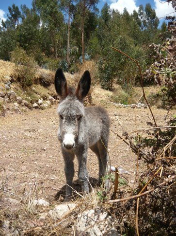 Aww a baby donkey (an Ass-let?)