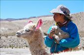 Waiting with pet llama - A young girl, waits for her ride along with her pet Lllama on the side of the road , in the middle of the Atacama desert.: by danjfwalker, Views[190]