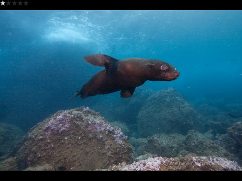 and another fur sea lion
