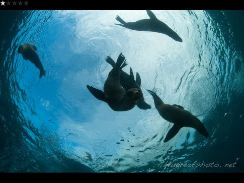 Checkout dive - Sealions at 'Sealion Island'