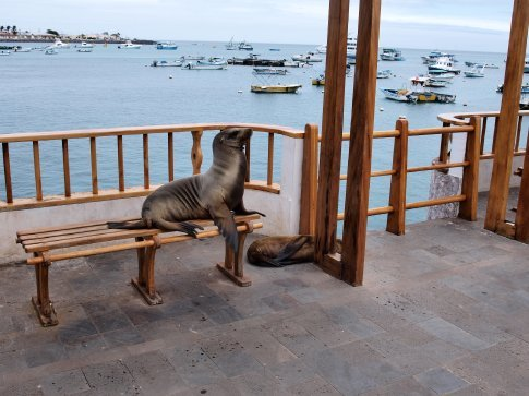 Sea lion relaxing on the jetty at St. Christobel
