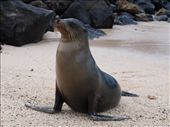 St. Christobel - Sea lion of a beach: by dannygoesdiving, Views[141]