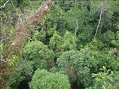 Looking down on the canopy: by dannygoesdiving, Views[307]
