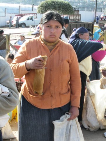 Otovala - animal market - a guinea pig is selected from the crowd.