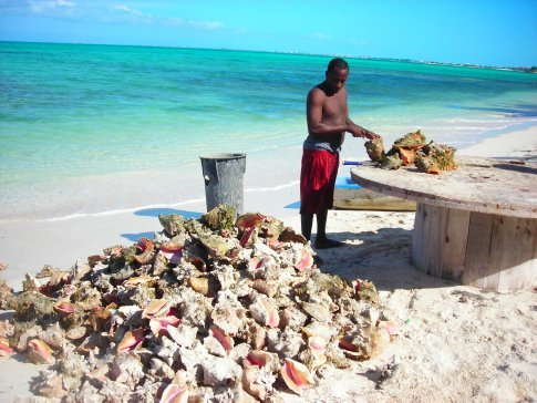 Conch Shack - preparing conch