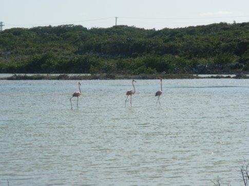 Flamingos (Blue Hills)
