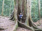 Cuc Phuong National Park - The '1000 year old' tree: by dannygoesdiving, Views[1225]