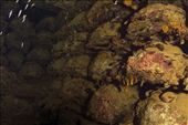 San Francisco Maru - Hold 1: Mines: by dannygoesdiving, Views[902]