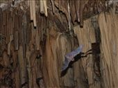 German Lighthouse: Caves (and bat): by dannygoesdiving, Views[216]