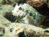 Sams Macro Wall: by dannygoesdiving, Views[189]