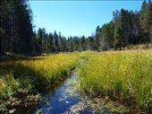 Yosemite - Meadows: by dannygoesdiving, Views[230]