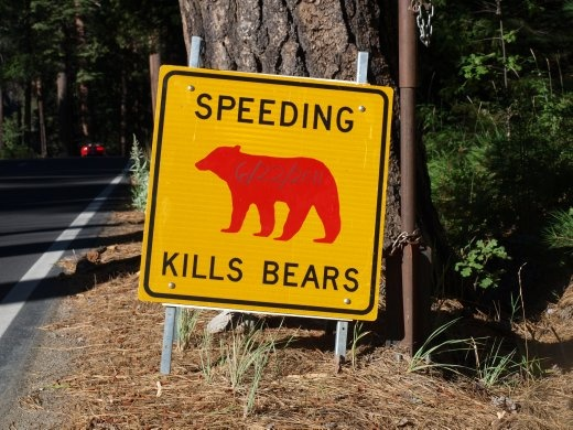 Yosemite - a sign is put up in each place where a bear is killed by a motorist