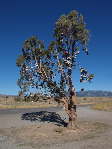 Shoe Tree on route 395