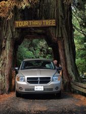 'Tour through Tree'.  1 of 3 remaining redwoods that were hollowed out to allow vehicles to drive through.: by dannygoesdiving, Views[189]