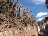 Cusco - San Blas streets: by dannygoesdiving, Views[276]