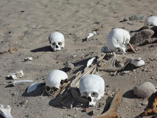 Nazca - Cahuachi -  Grave robbers !