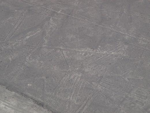 Nazca - Nazca Lines - pelican