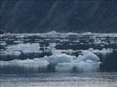 Tracey Arm Fjjord: by dannygoesdiving, Views[105]