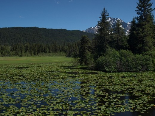 Seward Highway - Lily Pad Lake