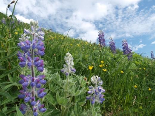 Harding Ice Field Trail - Meadows