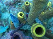 Spotted moray eel: by dannygoesdiving, Views[198]