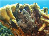 Frogfish: by dannygoesdiving, Views[263]
