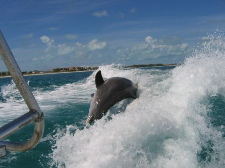 dolphin at stern of boat