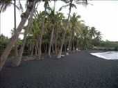 Punaluu Beach Park - a black sand beach just does not seem right to sunbathe on: by dannygoesdiving, Views[398]