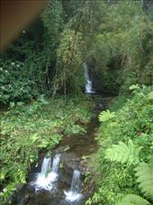 Akaka National Park: by dannygoesdiving, Views[338]