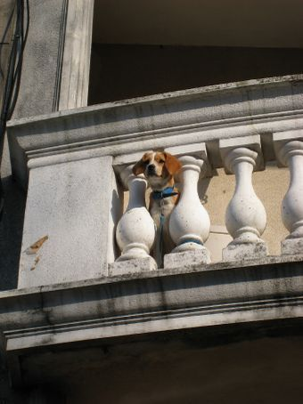 One for Di, a Beagle on a balcony