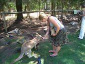 Feeding Roo's again.: by dave_sarah, Views[140]