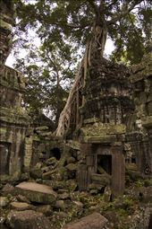 Not all of the Angkor temples are preserved as time and nature take it over.: by davefranz, Views[95]