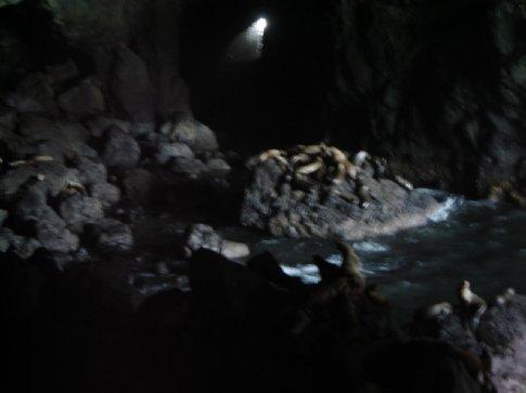 SeaLion caves