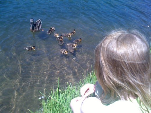 Feeding the ducks at Keystone lake