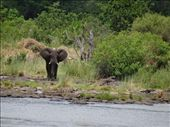 Another shot of the elephant: by davidt, Views[116]