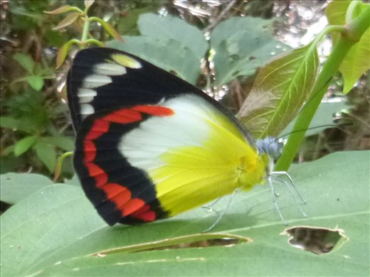 Beautiful butterfly - Marks great camera work