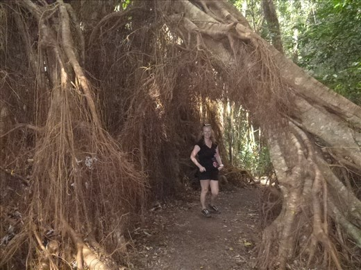 crazy tree!!