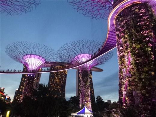 Supergrove trees at night