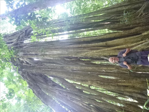 Mark and big tree