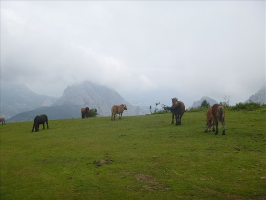 Lovely horses on the plateau