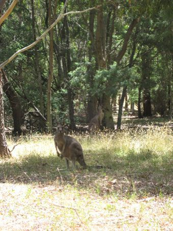 Our first roos!