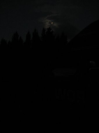 The forest at night.
