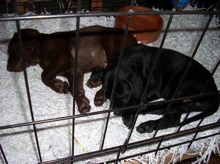Puppiessss.