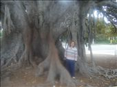 Amazing Tree in Beverly Hills with Diana: by dianaandmalcolm, Views[105]