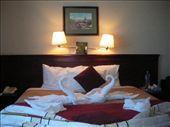 Swan towel arrangement !!: by dianne_peter, Views[165]
